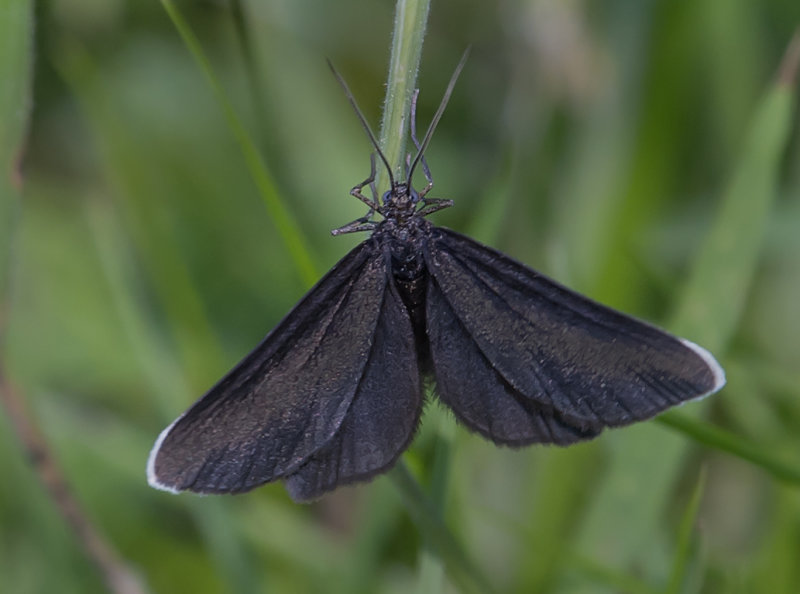 Chimney-Sweeper
