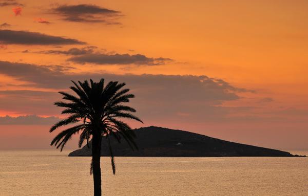 Greek Palm