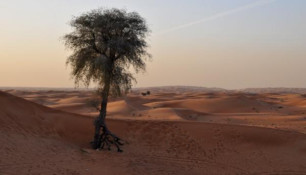 Lone Desert Tree