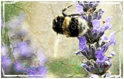 Crumble-ee Bee
