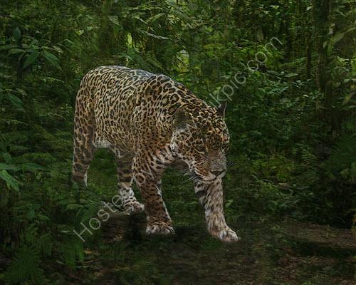 Jaguar Patrol