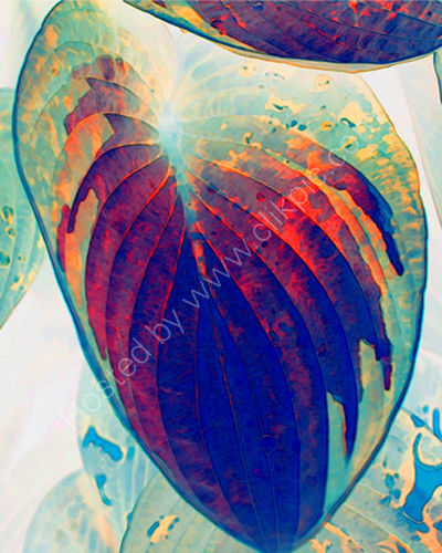 Jelly Leaf