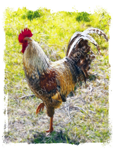 Rugged Rooster 2