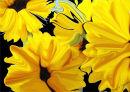 Sunflowers in Silk