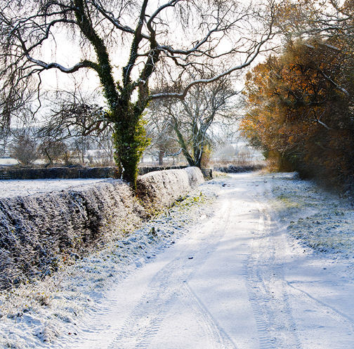 Winter on a Country Lane