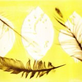 Brown feathers