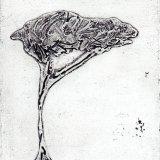 Stone Pine I