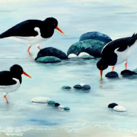 Oystercatchers in the shallows