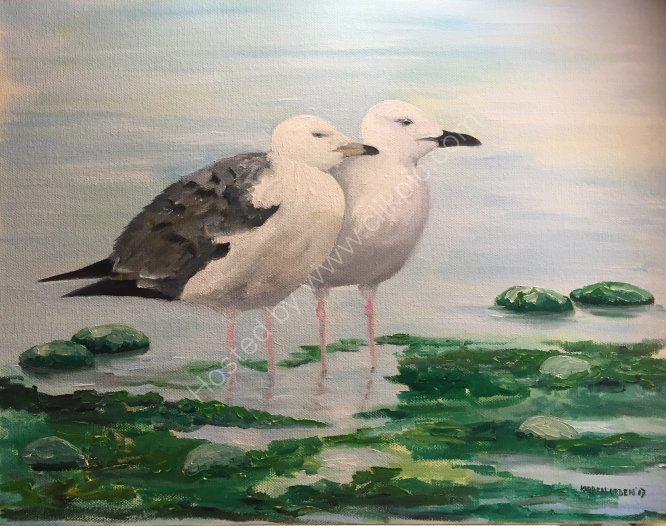 Young gulls in the shallows