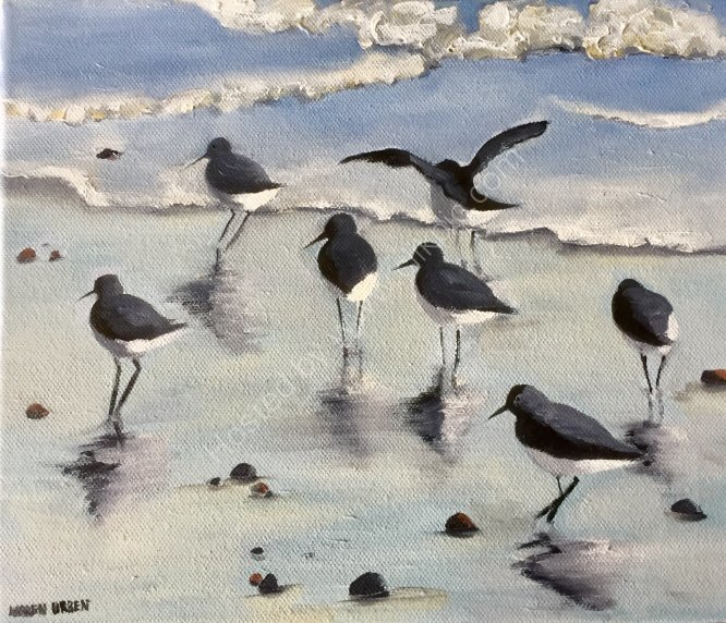 Seabirds on wet sand. SOLD