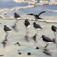 Seabirds on wet sand. SOLD