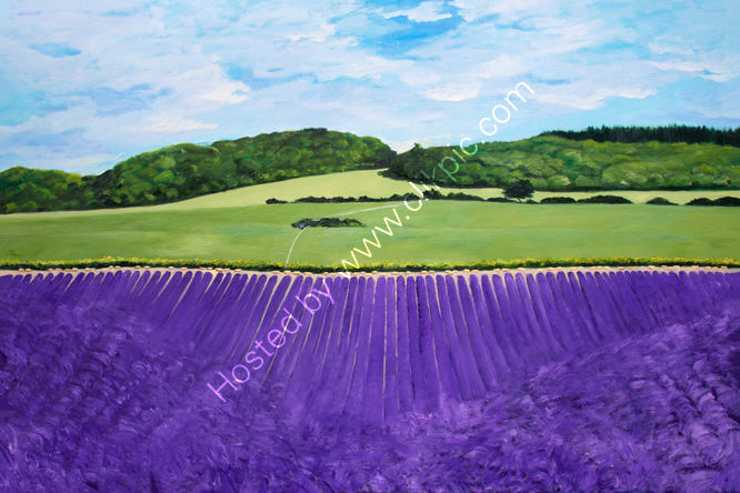 Sussex Lavender Fields