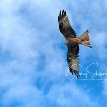 14. Kite flying high