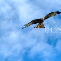 15. Kite on the turn