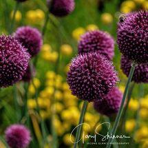 22. Globe Flowers