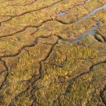 Arty Marsh land
