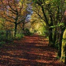 Autumn 1 (15)