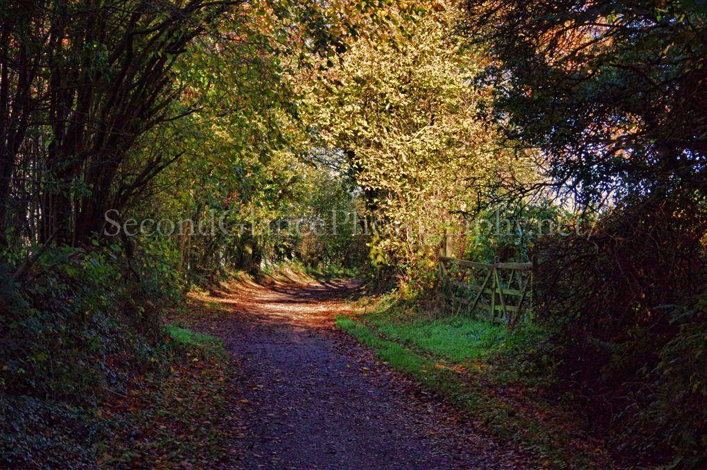Autumn 1 (18)