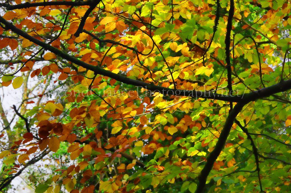 Autumn 1 (24)