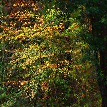 Autumn 1 (25)