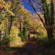 Autumn 1 (36)