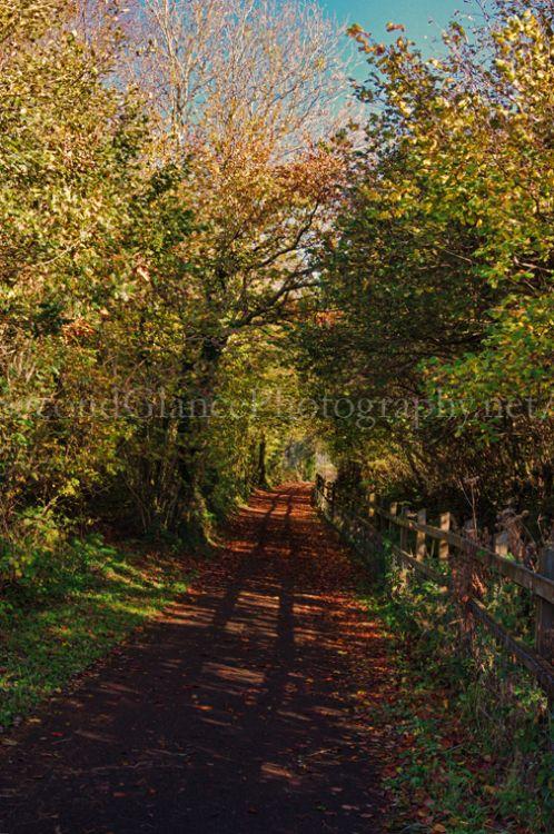 Autumn 1 (37)
