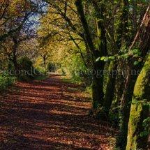 Autumn 1 (39)
