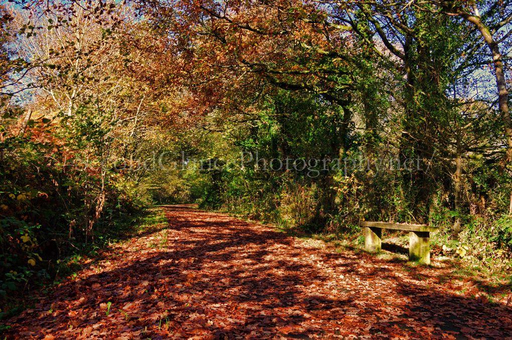 Autumn 1 (4)