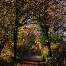 Autumn 1 (43)