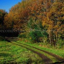 Autumn 1 (9)