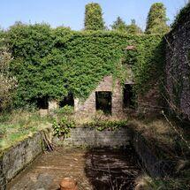 Back garden Pool