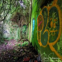 Graffiti in the undergrowth