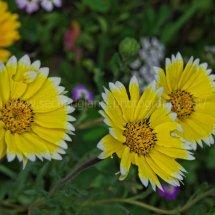 Layby Wild Flowers (12)