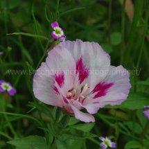 Layby Wild Flowers (14)