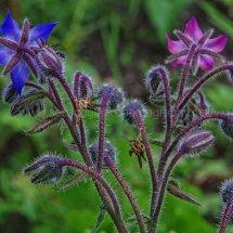Layby Wild Flowers (16)