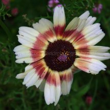 Layby Wild Flowers (20)