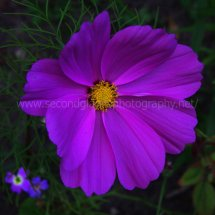 Layby Wild Flowers (22)
