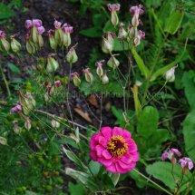 Layby Wild Flowers (25)