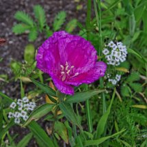 Layby Wild Flowers (9)