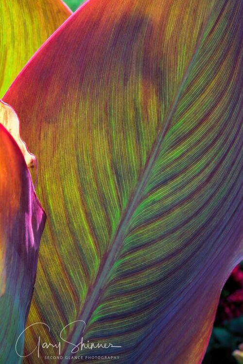 Light Leaf