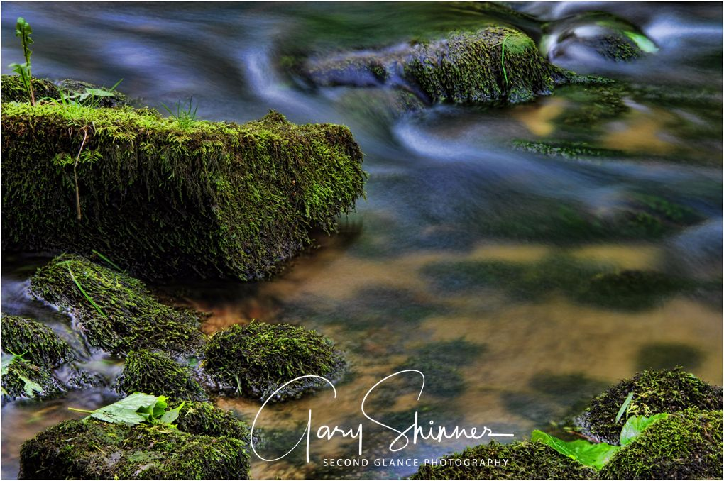 Mossy ebb and flow