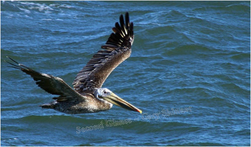 Pelican - The flyby