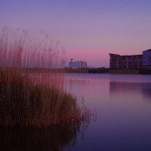 Reeds Sunset 1