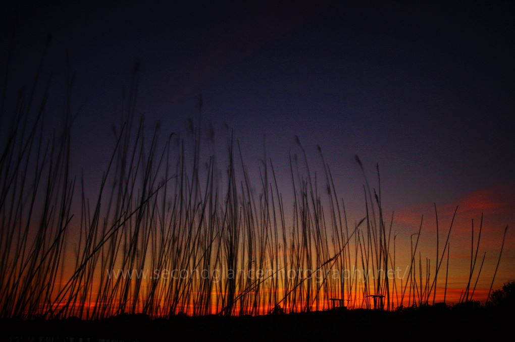Sosban Sunset -Through the reeds