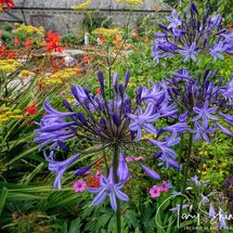 Sunken Garden 6 - Flowers