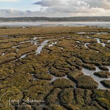 The Marshes of the estuary