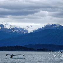 Whale watch rewards - Juneau