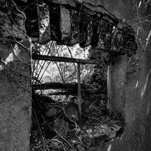 Window overgrown