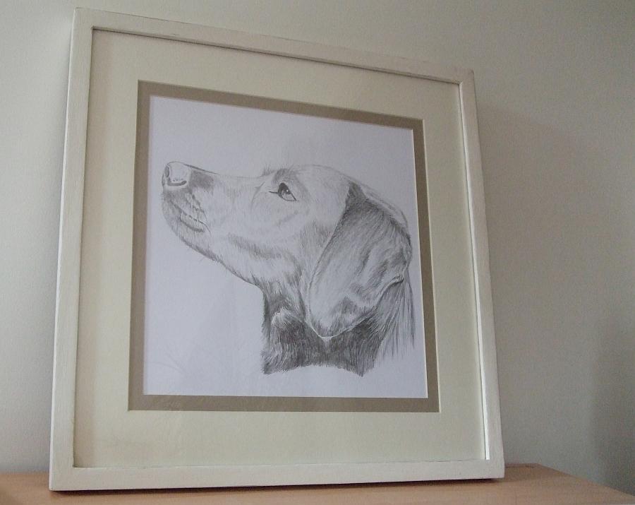 Labrador Pencil Portrait