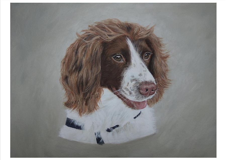 Springer Spaniel Portrait in Acrylics